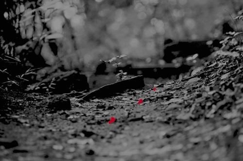 ブラッドハンターHDポケット 暗闇で遂行する自然色を抑え、血液(赤)を強調させる特殊光学フィルターレンズを使用し血痕を見つける為に最適な光を照射するフラッシュライト。